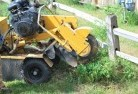 Bellevue Heights Stump grinding services 3